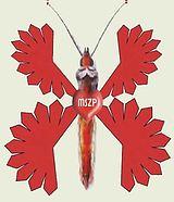 elkúrt pillangószív