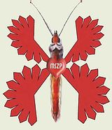 Pillangószív repríz 3